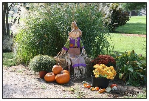 pumpkin-991825_1920.jpg